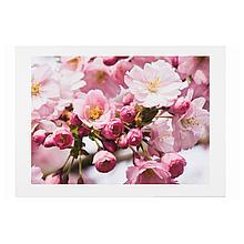 ЭДЕЛВИК Постер, весенний цветок II