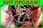 Intoxic (Интоксик) избавит от паразитов и глистов, фото 6