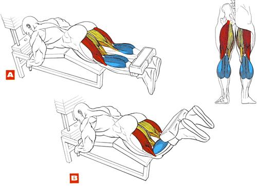 Сгибание ног лежа, фото 2