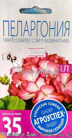 """Семена пакетированные Агроуспех. Пеларгония """"Пинто Скарлет Стар F1"""", фото 2"""