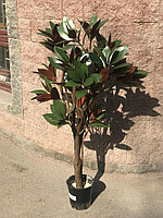 Фикус крупнолистный (ботаническая копия)
