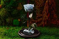 Стабилизированная роза  (роза в колбе)