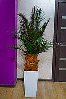 Стабилизированная пальма