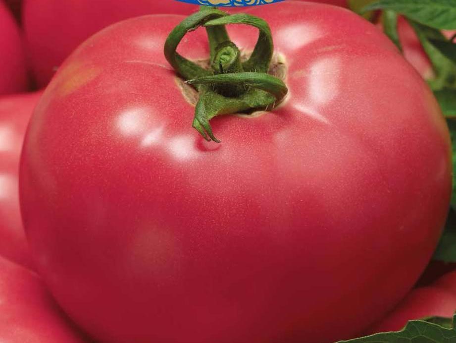 Семена томат Изящный F1 500 шт