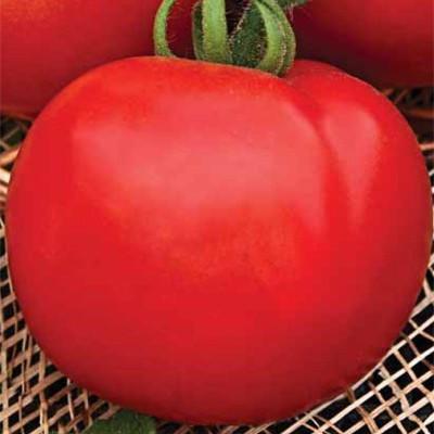 Семена томат Капитан F1 (Capitan F1) 1000 шт