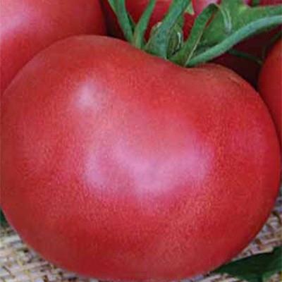 Семена томат Легионер F1 1000 шт