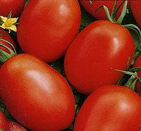 Семена томат Новичок (1 уп-50 гр -13500 шт)