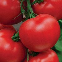 Семена томат Пегас F1 500 шт