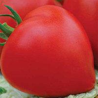 Семена томат Премиум F1 1000 шт
