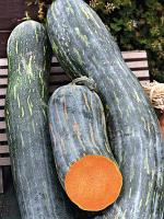 Семена тыква мускатная Семейная (1 уп- 1 кг - 4000 шт)