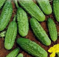 Семена огурец Бастион F1 (1 уп-1000 шт)
