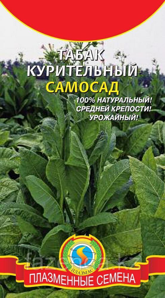 Семена Табак курительный Самосад 300шт