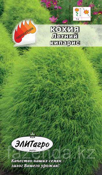 Кохия Летний кипарис 0,5гр