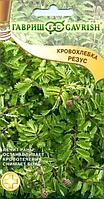 Семена. Кровохлебка «Резус», 0,5 г