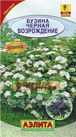 Семена. Бузина черная «Возрождение», 0,5 г