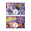 Альбом для рисования, Цветы. Прованс, А4, 16 листов