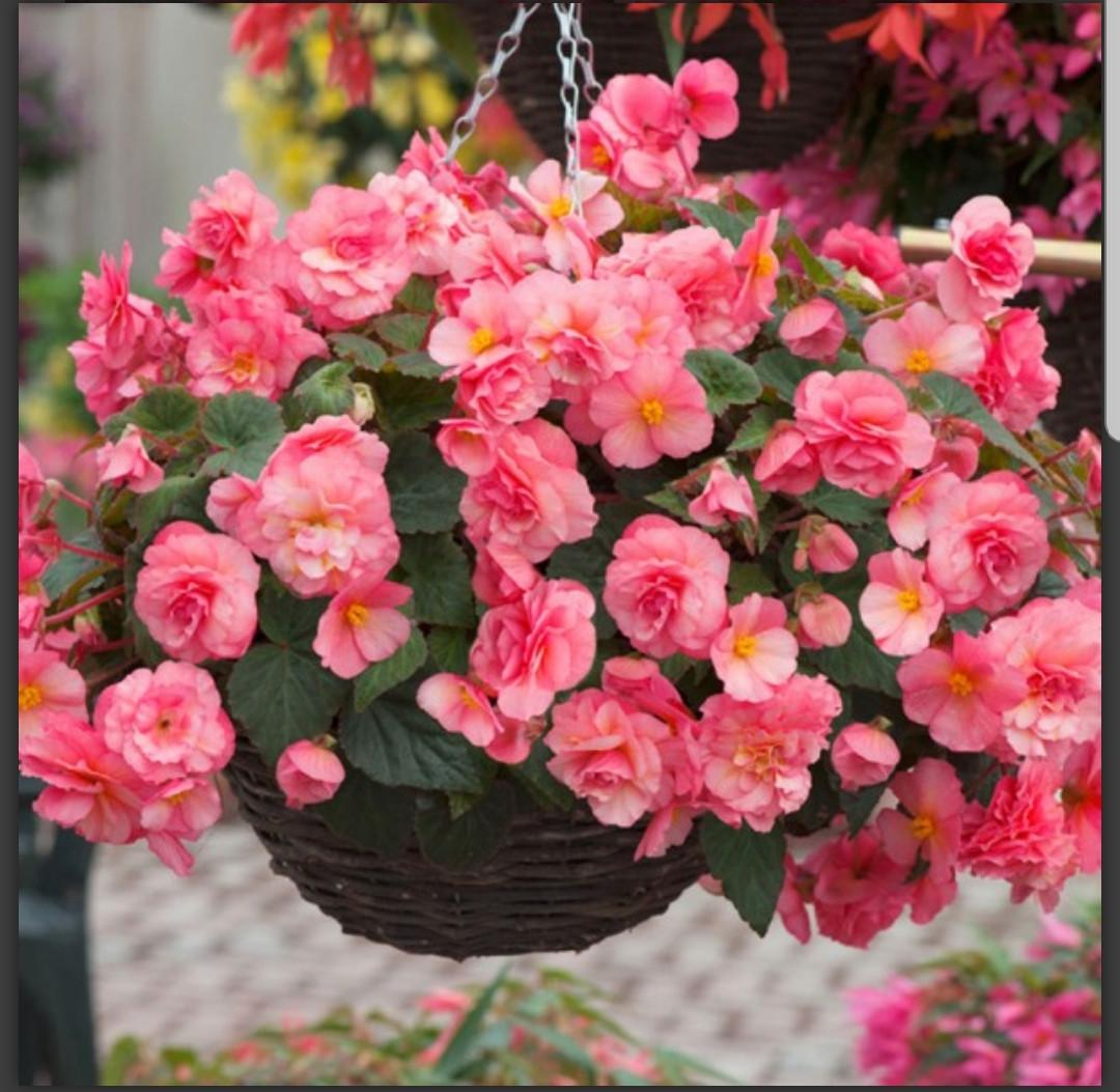 Sweetspice English Rose (с ароматом) N338