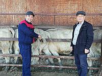 Повышение эффективности методов селекции в скотоводстве