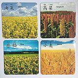 """Карточки с картинками """"Овощи и фрукты"""" на китайском языке, фото 5"""