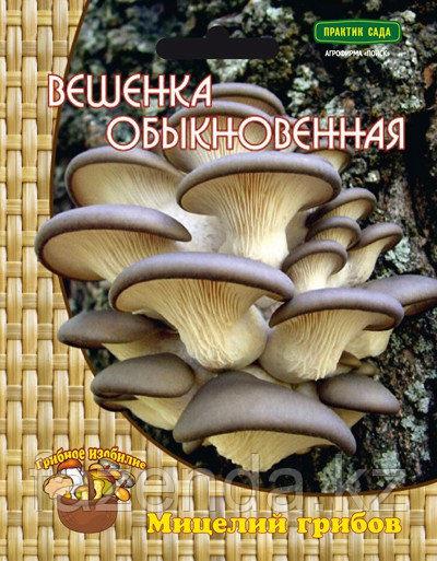 Грибы Вешенка обыкновенная 12шт
