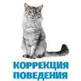 Коррекция поведения кошек