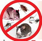 Уничтожение мышей в Актау, фото 2
