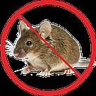 Уничтожение мышей, фото 2