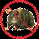 Уничтожение крыс, фото 2