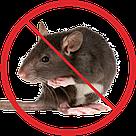Борьба с крысами, фото 2