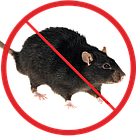 Защита от крыс, фото 2