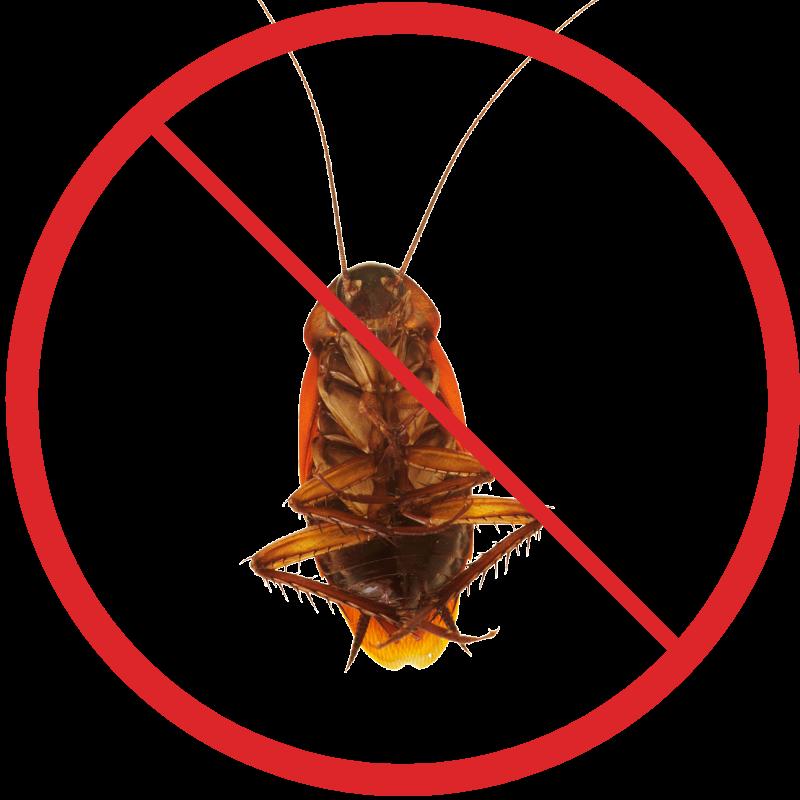 травить тараканов в домашних условиях