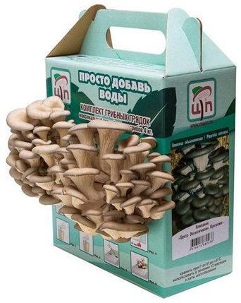 Комплект грибных грядок «ПРОСТО ДОБАВЬ ВОДЫ», фото 2