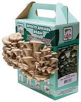 Комплект грибных грядок «ПРОСТО ДОБАВЬ ВОДЫ»