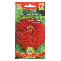 Семена цветов Цинния георгиновидная 'Вишневая королева', О, 0,3 г (комплект из 10 шт.)