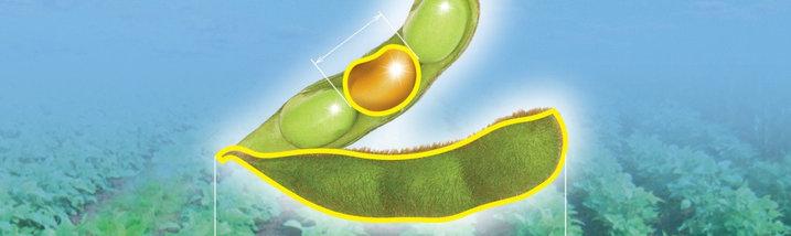 Гербицид Пульсар, 4% в.р. Золотой стандарт для возделывания бобовых, фото 3