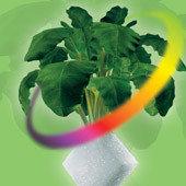Гербицид Фронтьер Оптима, 72% к.э.Почвенный гербицид с широким спектром действия против однодольных , фото 3