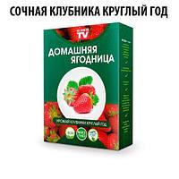Чудо-набор для выращивания клубники дома «Сказочный огород круглый год» без ГМО (Крупная клубника)