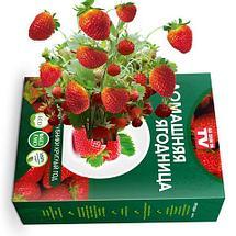 Чудо-набор для выращивания клубники дома «Сказочный огород круглый год» без ГМО (Крупная клубника), фото 2