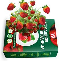 Чудо-набор для выращивания клубники дома «Сказочный огород круглый год» без ГМО (Белая клубника со вкусом, фото 2