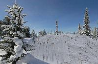 Маскировочная сеть снег
