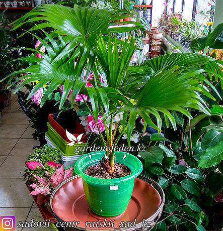 Пластиковый горшок для орхидей. Цвет: зеленый, полу-прозрачный. Объем: 2л., фото 2