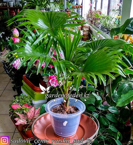 Пластиковый горшок для орхидей. Цвет: белый, полу-прозрачный. Объем: 2л., фото 2