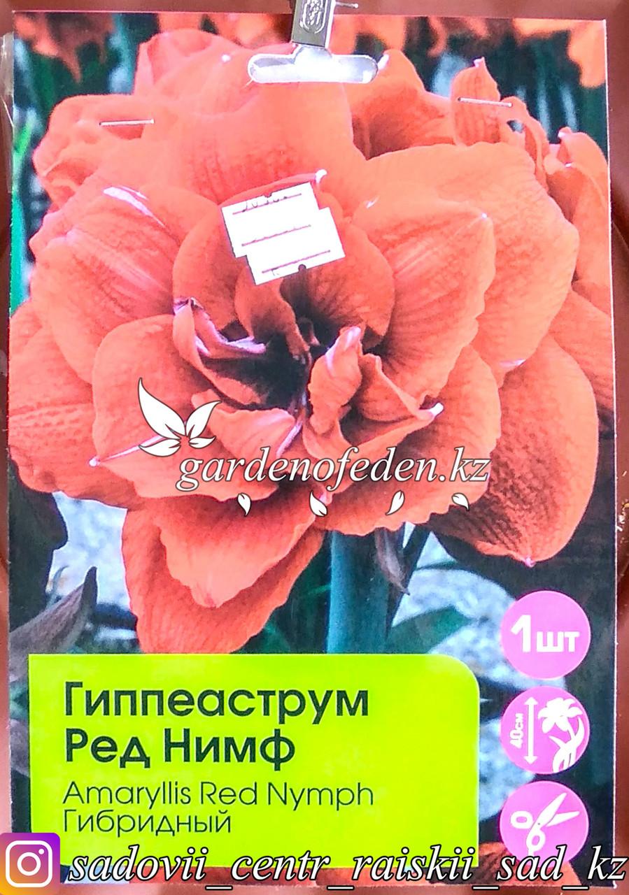 """Луковицы гиппеаструма """"Ред Нимф"""". Резерв: шт."""