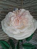 Большие цветы для интерьера. Пионовидная роза.  Creativ 71, фото 2
