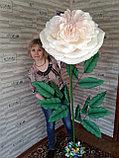 Большие цветы для интерьера. Пионовидная роза.  Creativ 71, фото 3