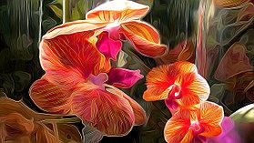 """Картины стразами """"Цветы орхидеи"""" 30*40"""