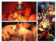 Лампа инфракрасная для обогрева животных 100 вт, фото 1