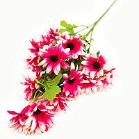 Полевые цветы, фото 1