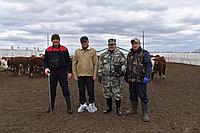 Испытание бычков по собственной продуктивности