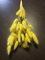 Сухоцвет заячий хвостик, Лагурус жёлтый
